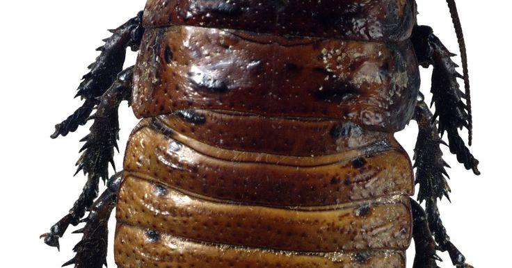¿Cómo eliminar las cucarachas de mi baño y cocina?. Las cucarachas son insectos repulsivos y muy resistentes -se reproducen rápido y pueden vivir sin comida durante meses- que definitivamente nadie quiere tener en su casa. No sólo son una plaga terrible, si no que pueden contaminar tus alimentos y transmitir enfermedades. A menudo, hacen de su hogar las habitaciones húmedas y tibias como la cocina ...