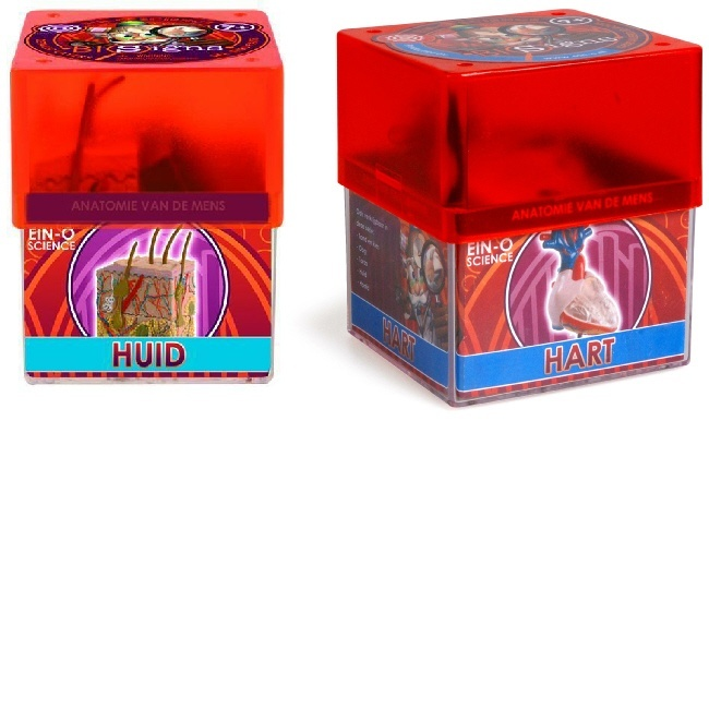 Ein-O Educatief speelgoed Anatomie van de huid en van het hart voordeelpakket