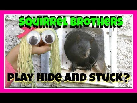 HAND PUPPET SHOW FOR CHILDREN -Squirrels talk to Goldie