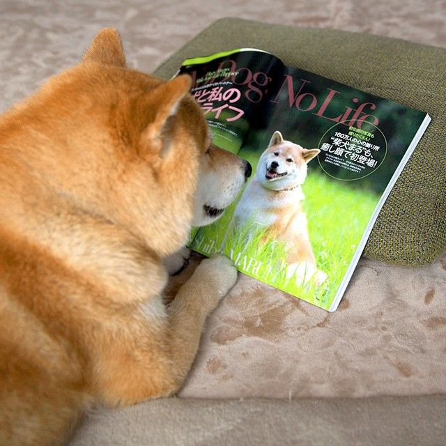 Maru has featured a magazine