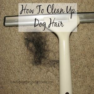 How To Clean Up Dog Hair
