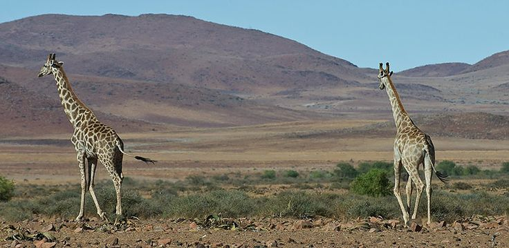 Namibia – Explore Sossusvlei, Etosha, Damaraland, Skeleton Coast | Wilderness Safaris is a true conservation success story