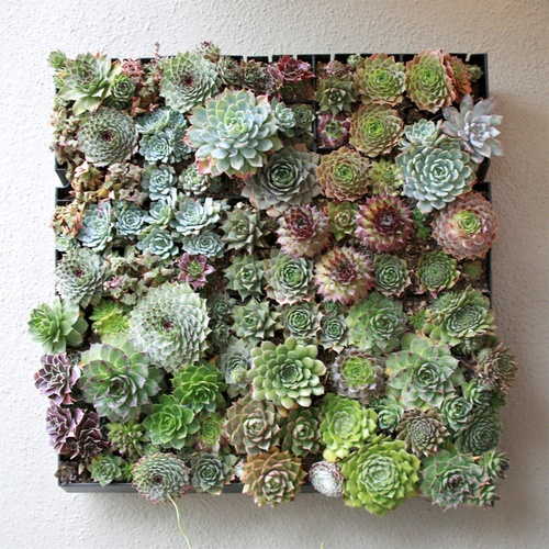 1000 Images About Potted Plants On Pinterest
