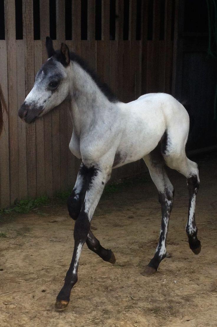Pin by Janis Severson on horses | Horses, Appaloosa horses ...