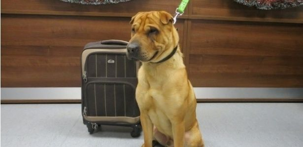 Male mutt Sharpei was found tied to a grid; luggage included pillow, toy, food bowl and feed A protective association of animals in Scotland are trying to locate the owner of a dog that was abandoned at a train station along with their belongings in a suitcase. The male, crossing result of shar-pei with another race, was found tied to a railing outside the central station of Ayr in southwestern Scotland, last Friday, January 2. The case included the dog pillow, a toy, a bowl of food and…
