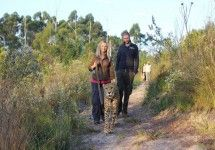 Cheetah Walks at Tenikwa Wildlife Awareness Centre near Plettenberg Bay, Garden Route. Come on a cheetah walk with us, through the beautiful Tsitsikamma forest and Cape floral fynbos.