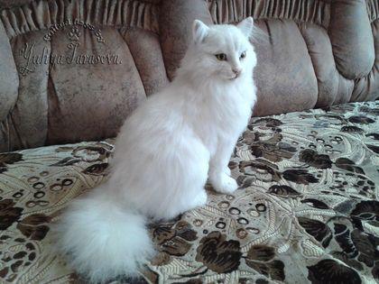 Ангорский Кот. - котик,котейка,кот,киса,кошка,кошечка,войлок,шерсть,авторская работа