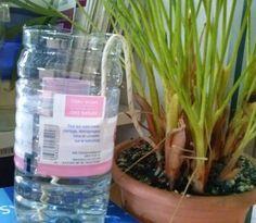 A B C vos IG: Arrosage automatique pour plantes d'intérieur