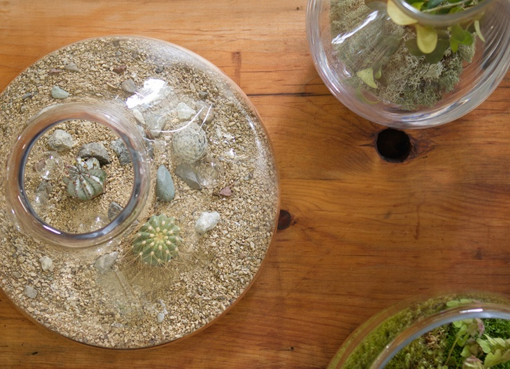 Created In The Tradition Of American Craftsmanship And Designed In  Partnership With Terrain, Our Collection. Glass TerrariumTerrariumsGreen ... Part 83