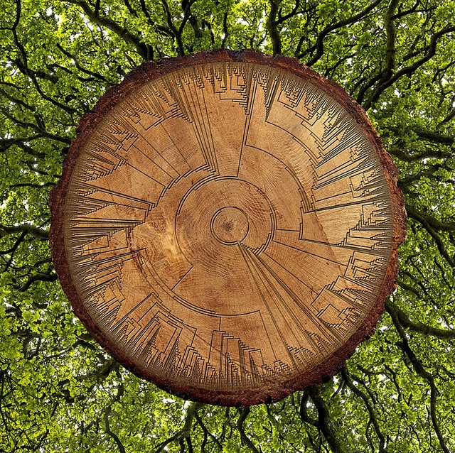 Phylogenetic Tree of Life, Homage to Darwin by Carol Ballenger, 2007. (Hillis plot inscribed on a ring of English oak.)