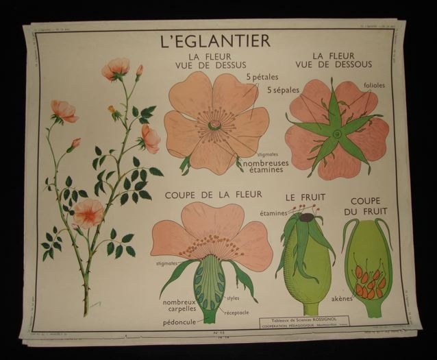 Vintage French School Posters