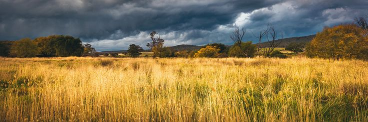 Photographed by Andrew Carter - I love the contrast between the dark stormy sky and the bright grass