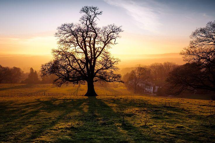 #Landscape #photography, sunrise through the mist