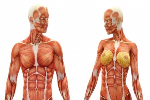 Az emberi test rejtelmei: megdöbbentő dolgok amit nem tudtál magadról!