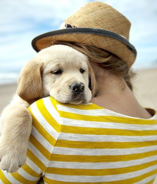 loving puppy