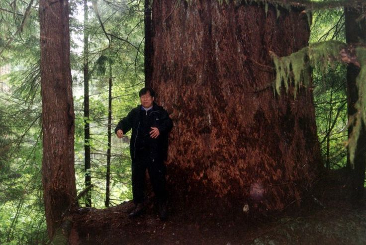Mingtang and Big Tree :) From the archives (Facebook North American Zhong Yuan Qigong Association)
