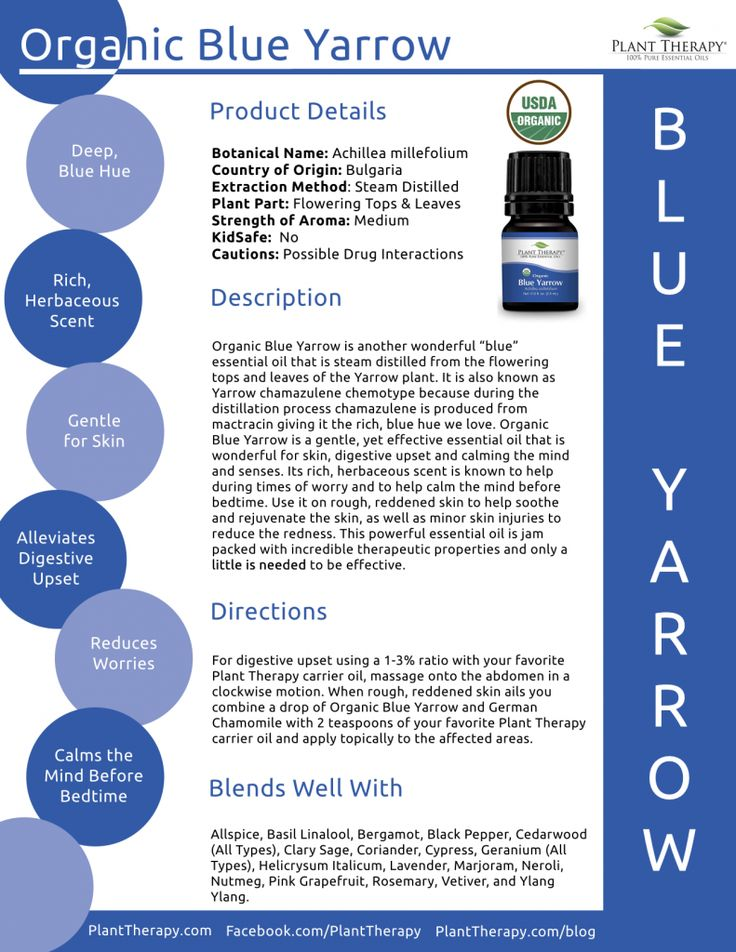 February Oil of the Month – Blue Yarrow   Plant Therapy Blog