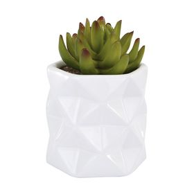 White Faceted Succulent