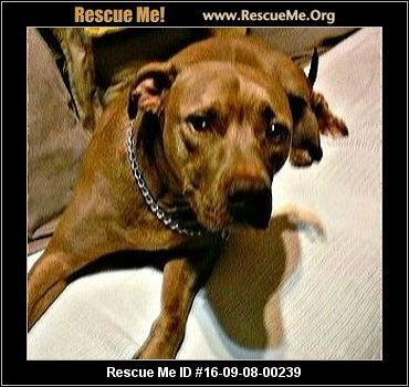 UPDATE:  11/18/2016  Coco is still available for adoption.  ― Tennessee Dog Rescue ― ADOPTIONS ―RescueMe.Org Coco has been in a loving, adult home, but because of health problems, the owner cannot keep her.  She's in danger of being euthanized.