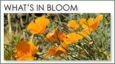 San Diego Botanic Garden.  Hours  9:00 am – 5:00 pm Daily. Admission: Adults $12.  230 Quail Drive, Carlsbad, CA