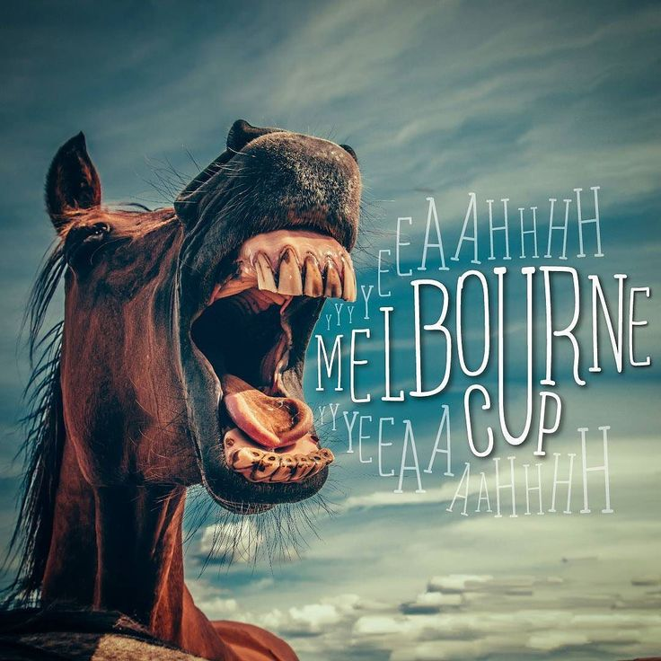 Horsey McHorseface is excited for the Melbourne Cup. Are you?  Back a winner and stay at Discovery so you've got more money to put on that 'sure thing' Dave told you about.  #nevertrustdave #melbournecup #horseracing #flemington #springracing #forthewin #melbournecupcarnival #hostel #hostelfun #hosteling #hosteldays #hostellife #hostelworld #hosteldiaries #hostelfriends #hostelmelbourne #backpacker #backpackers #backpackerlife #backpackermelbourne #travel #traveller #traveling…