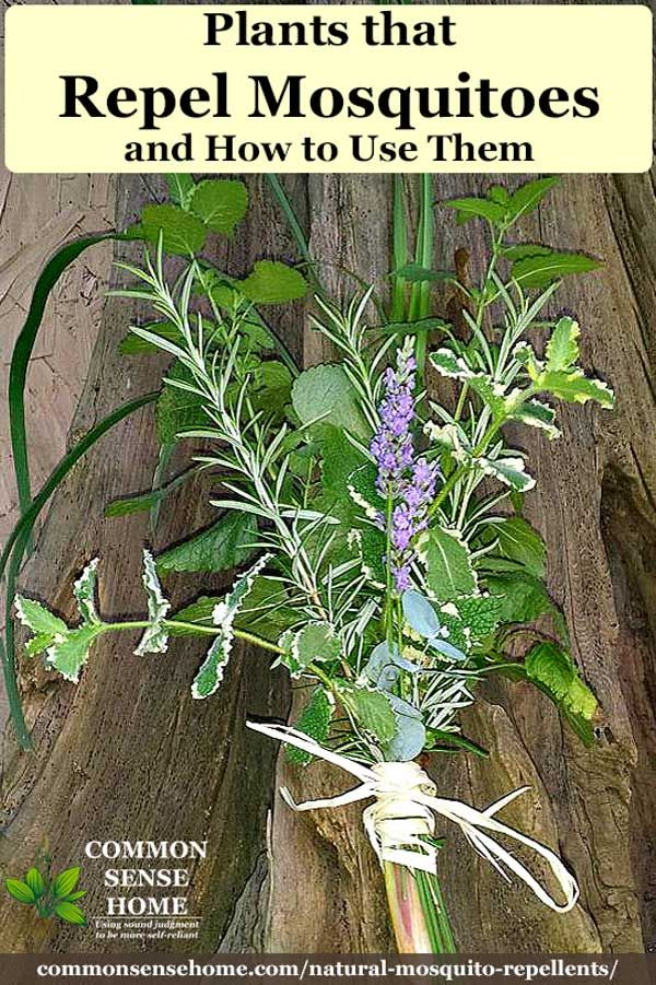 Natural Mosquito Repellents That Work Plants That Repel