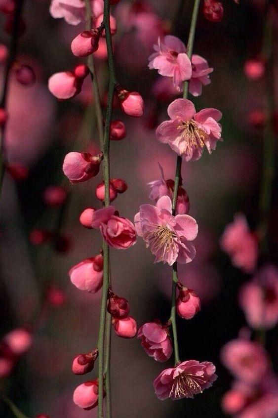 Картинки цветы в хорошем качестве вертикально