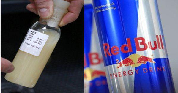 Confirmado: Urina e sêmen do Touro são os ingredientes secretos usados no Red Bull e outras bebidas energéticas!
