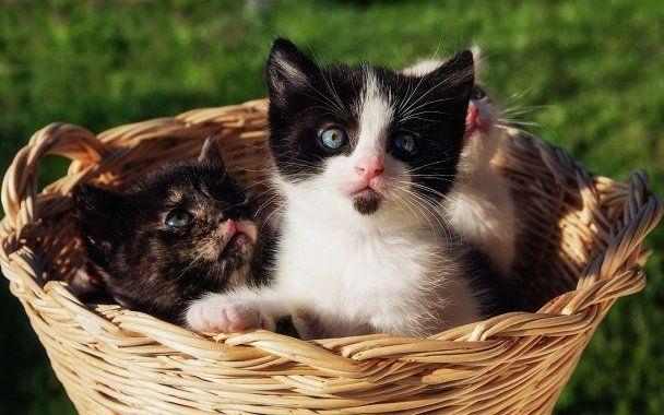 一覧 種類 猫 の