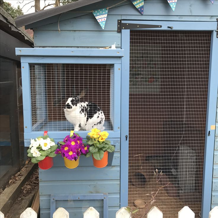 Cat Cage Outdoor Rabbit Hutches