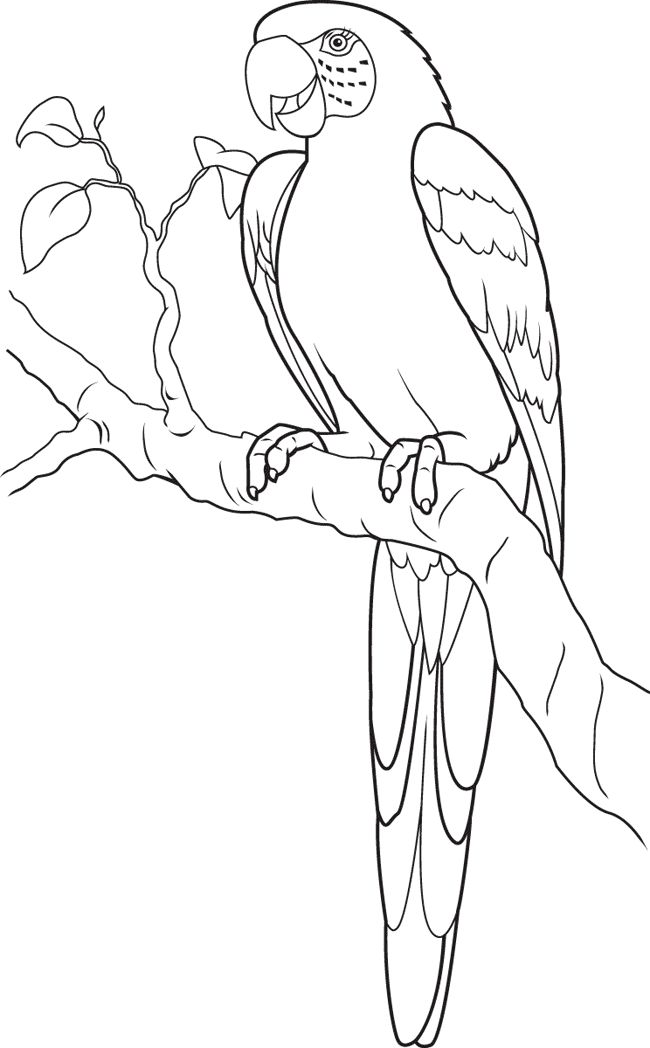 Parrot coloring page animals town animals color sheet parrot