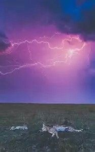 South Africa Lightning