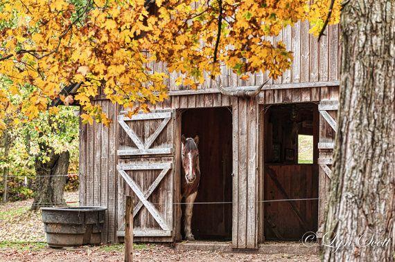 Barn Pony -  Nature photography, landscape photography, fall, autumn, horse, fine art print, leaves, New England, new hamsphire