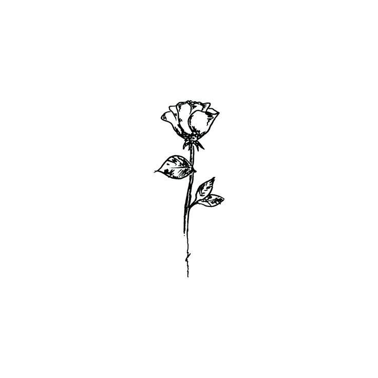 Simple Black And White Line Art : The best rose drawing simple ideas on pinterest