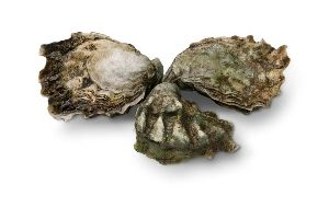 Direct mail FRESH shellfish from Pacific Northwest: Oysters, Mussels, Clams