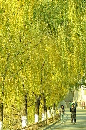 Universidad de Beijing. China
