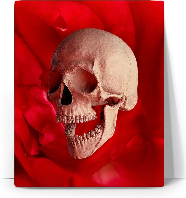 Check out my new product https://www.rageon.com/products/skull-and-red-rose-art-canvas-print?aff=BWeX on RageOn!