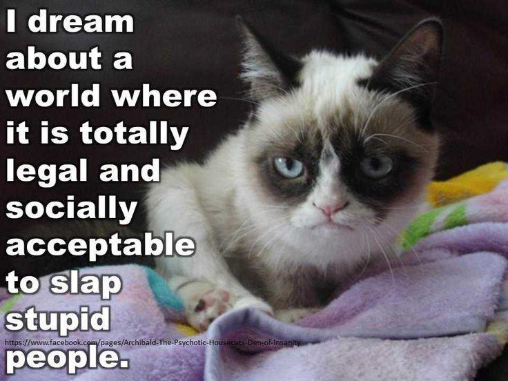 1 Grumpy Cat Facebook Memes