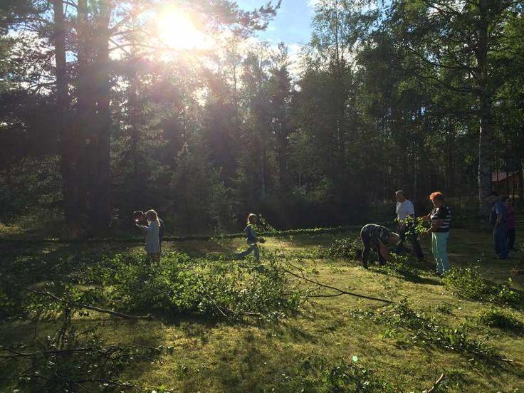 Binder tångan inför komidsommar i Mångberg i Dalarna