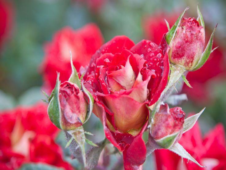Terre nature rose fleur nature fond d 39 cran for Fond ecran ete fleurs