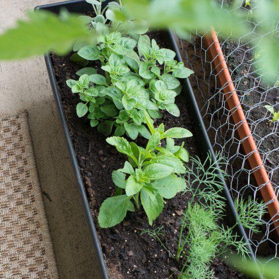 Best 25+ Apartment balcony garden ideas on Pinterest ...