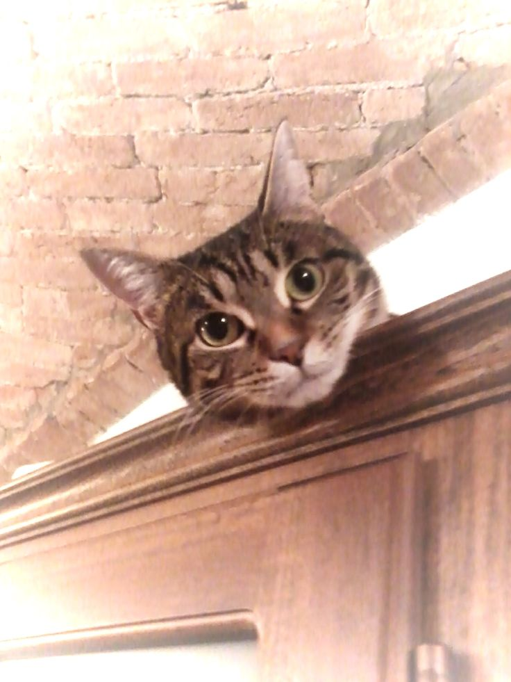 Minnie,la mia gattina!!!