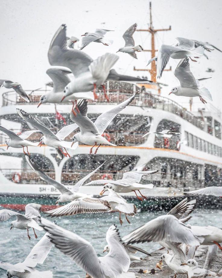 ✿ ❤ İstanbul, Turkey 31.Aralık.2015  http://angels35.tumblr.com/image/136417377640