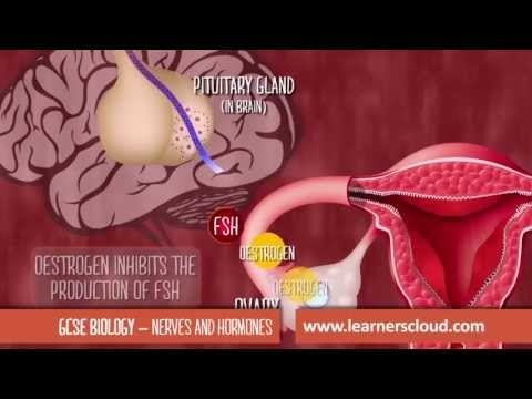 GCSE Biology module (sample): Nerves and hormones    By the end of this topic you will have covered:  - Hormones in our body  - Tropisms: hormone control and plant growth  - Uses of plant hormones  - The nervous system  - The reflex arc  - The synapse  - Brain and mind  - More...    GCSE revision videos and apps from LearnersCloud:  http://www.learnerscloud.com/student/products/gcse-revision-videos-apps/gcse-biology    Find out more…