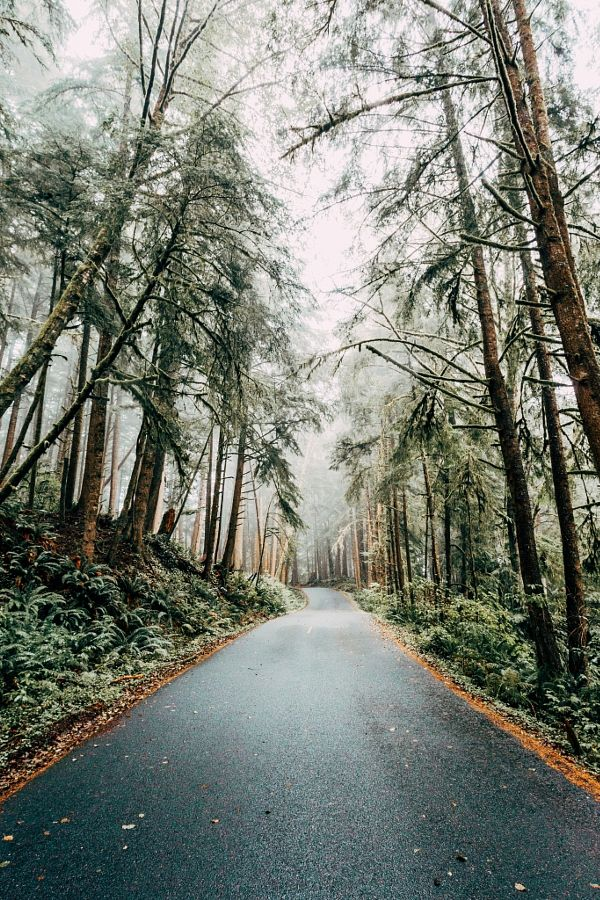 Forests | Road into a grey foggy woods
