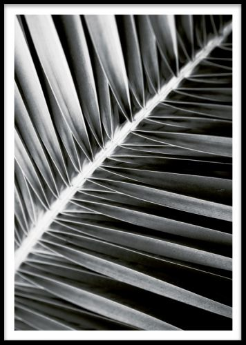 Plakat med botanisk mønster på palmeblade i sort og hvid. posters og plakater. www.desenio.dk