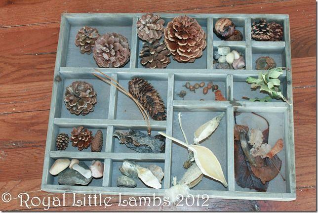 Nature box and Winter nature study