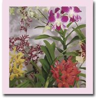 Send Hawaiian Tropical Flowers, Orchid Plants, Leis, Protea, Tuberoses, wedding flowers, Mother's Day Flowers, Gourmet gift baskets, Original Hawaiian Art and Enessa Organic Skin Care Products for delivery from HawaiianMagic.net Tropical Flowers