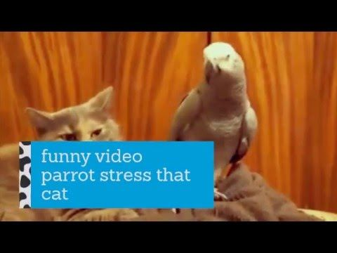 Funny video - parrot stress that cat