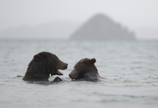 Two bears - Misha and Masha